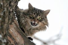 El gato que maúlla se sienta en un árbol Fotografía de archivo libre de regalías