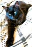 El gato que miente en cama Foto de archivo libre de regalías