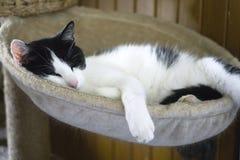 el gato que miente en su árbol foto de archivo libre de regalías