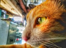 el gato que mira algo fotografía de archivo