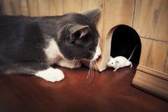 El gato que mira fijamente un ratón que sale de él es agujero Foto de archivo