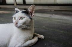 El gato que sueña despierto imagenes de archivo