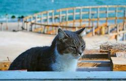 El gato que vive en la playa Fotografía de archivo
