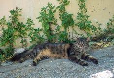 El gato rayado astuto finge estar dormido debajo de la cerca en Atenas, Grecia imágenes de archivo libres de regalías