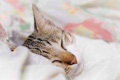 El gato rayado está durmiendo en manta en la medianoche fotos de archivo