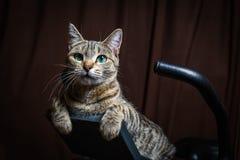 El gato rayado hermoso está mintiendo en una bici inmóvil y le está mirando fotos de archivo