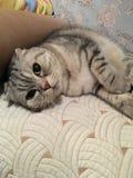 El gato relajado Fotografía de archivo libre de regalías