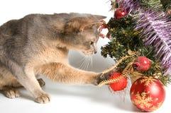 El gato resuelve Año Nuevo imagen de archivo