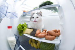 El gato roba la salchicha del refrigerador Imagen de archivo libre de regalías