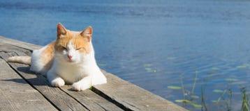El gato rojo cayó dormido en el embarcadero, rodeado por el agua fotos de archivo