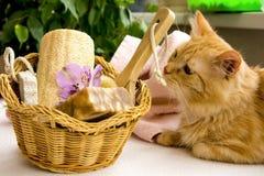 El gato rojo cerca de una cesta para el cuarto de baño, piedra pómez, vira de bordo, alstroemeria Foto de archivo libre de regalías