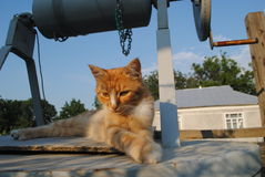 El gato rojo está descansando sobre el pozo Imagen de archivo