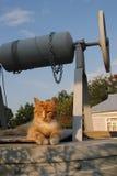 El gato rojo está descansando sobre el pozo Fotos de archivo