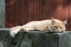 El gato rojo miente en piedra gris Imagen de archivo libre de regalías