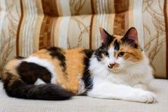 El gato rojo mullido miente en una silla Foto de archivo