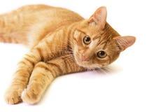 El gato rojo se aísla en blanco Foto de archivo libre de regalías