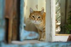 El gato rojo se está sentando en la ventana azul y está mirando a usted imagen de archivo libre de regalías