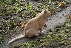 El gato rojo se sienta fotografía de archivo libre de regalías