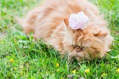 El gato rojo y subió Fotos de archivo