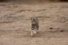 El gato salta Foto de archivo