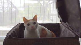 El gato salta de una maleta metrajes