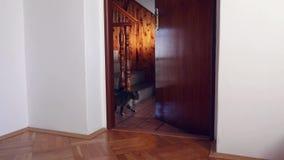 El gato salta en el tirador de puerta almacen de metraje de vídeo