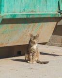 El gato salvaje de la basura después de una comida Imagen de archivo