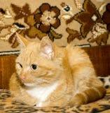 El gato se agachó en un Boulder Foto de archivo libre de regalías