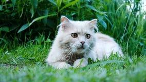 El gato se agachó y los saltos en el primer de la presa, cámara lenta almacen de video