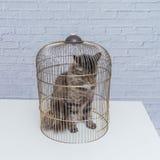 El gato se cerró en una jaula en una tabla contra una pared de ladrillo blanca imagen de archivo