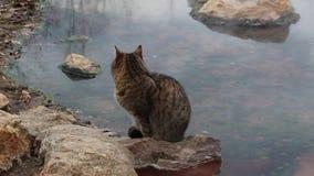 El gato se coloca cerca de los baños minerales en Rupite cerca del tiro corto de Kojuh almacen de video