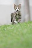 El gato se está ejecutando Imagen de archivo