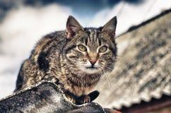 El gato se está sentando en el tejado Imagen de archivo