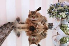 El gato se lava y se lame imagen de archivo