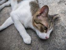 El gato se relaja Fotos de archivo