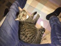 El gato se relaja fotos de archivo libres de regalías
