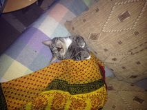 El gato se relaja foto de archivo