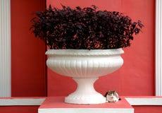 El gato se sienta al lado de la planta Potted Fotos de archivo libres de regalías