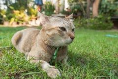El gato se sienta en campo Imágenes de archivo libres de regalías
