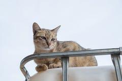 El gato se sienta en el tanque y la mirada algo Fotos de archivo libres de regalías