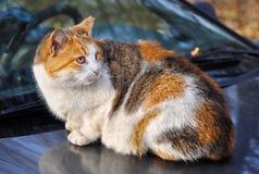 El gato se sienta en el tejado del coche imagenes de archivo