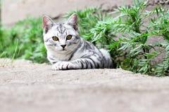 El gato se sienta en hierba verde en el fondo del jardín del verano Fotografía de archivo