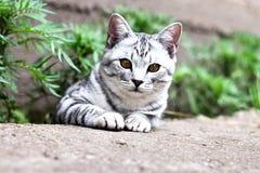 El gato se sienta en hierba verde en el fondo del jardín del verano Imágenes de archivo libres de regalías