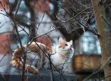 El gato se sienta en la cerca y caza los pájaros foto de archivo libre de regalías