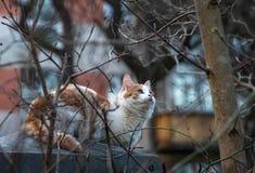 El gato se sienta en la cerca y caza los pájaros fotografía de archivo