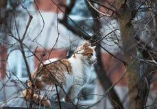 El gato se sienta en la cerca y caza los pájaros fotos de archivo libres de regalías