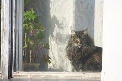 el gato se sienta en un alféizar y mira la ventana. Foto de archivo