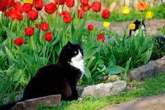 El gato se sienta entre tulipanes coloridos Foto de archivo