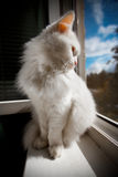 El gato se sienta por la ventana Fotos de archivo libres de regalías