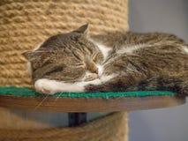 El gato se sienta y buscando una cierta cosa Imágenes de archivo libres de regalías